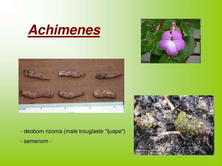 Achimenes