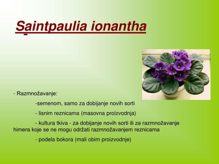 Saintpauli