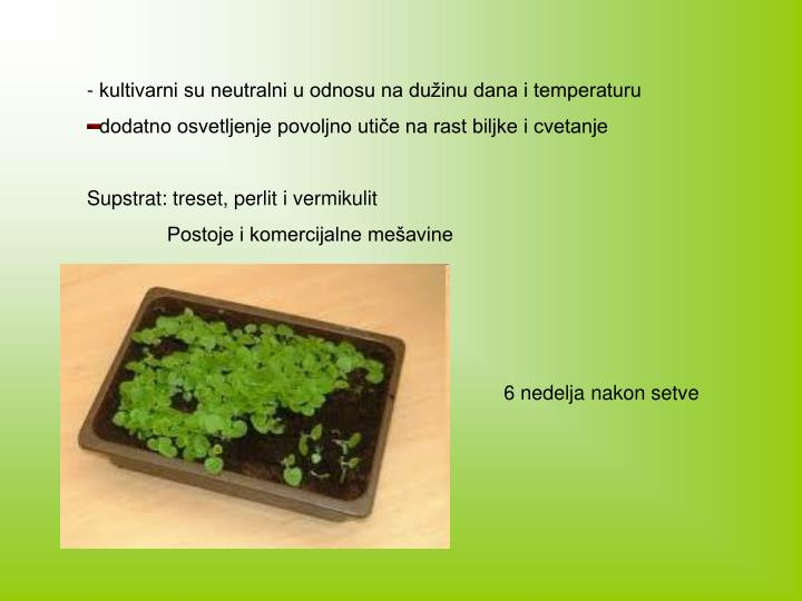 - kultivarni su neutralni u odnosu na dužinu dana i temperaturu