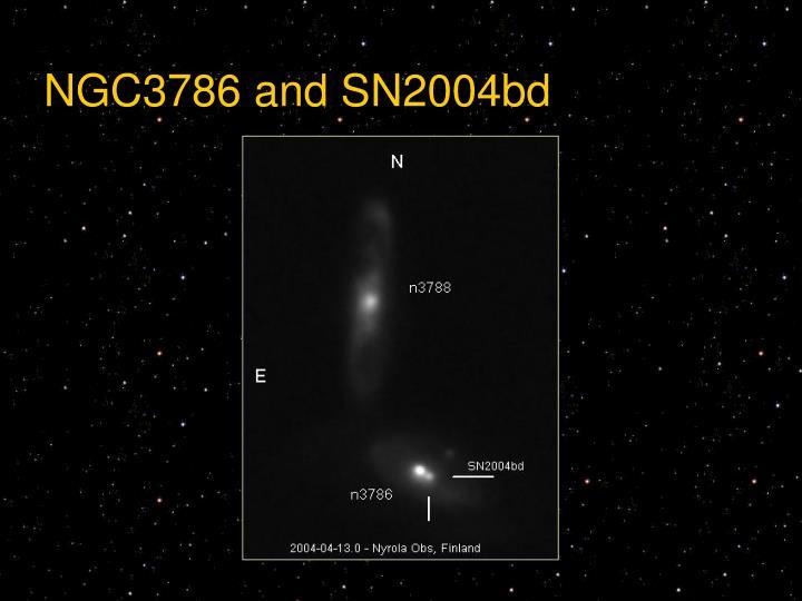 NGC3786 and SN2004bd