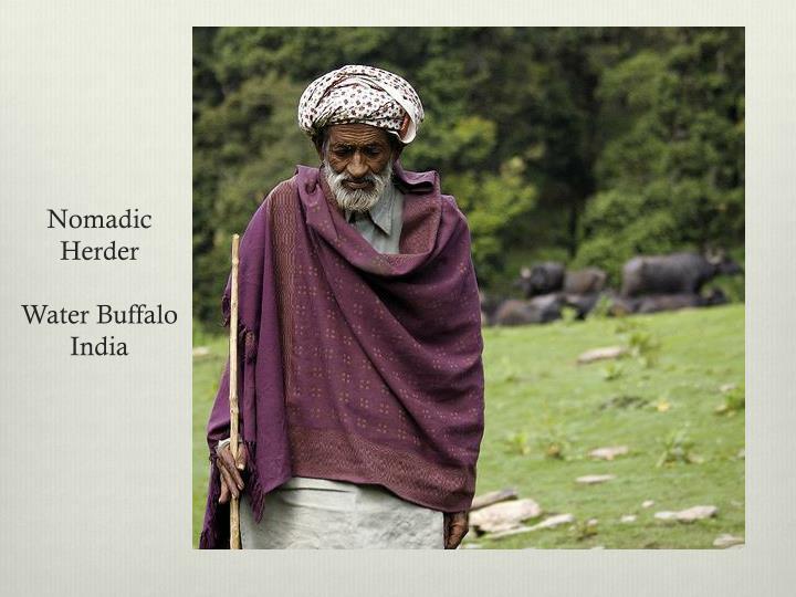 Nomadic Herder