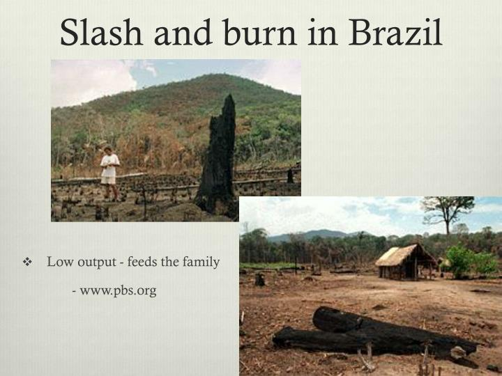 Slash and burn in Brazil