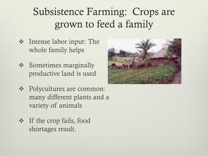 Subsistence Farming:  Crops are grown to feed a family