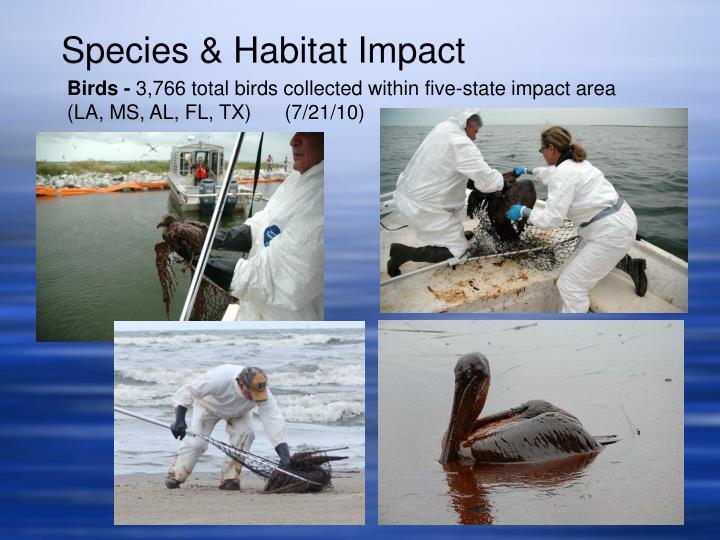 Species & Habitat Impact