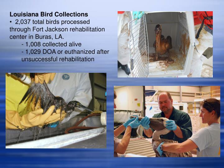 Louisiana Bird Collections