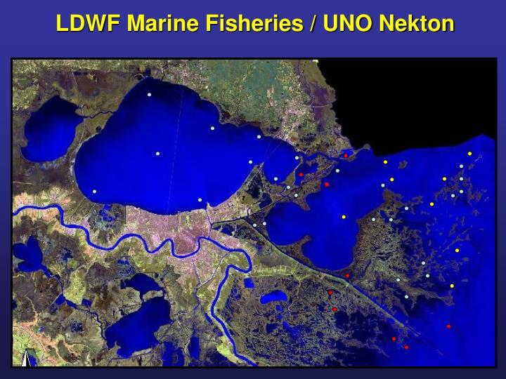 LDWF Marine Fisheries / UNO Nekton