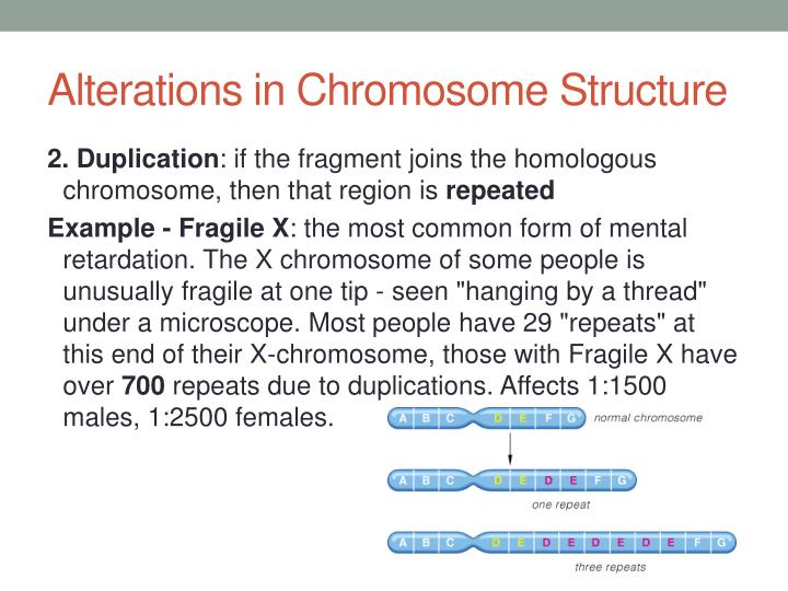 Alterations in Chromosome Structure