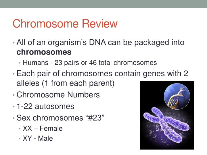 Chromosome review1