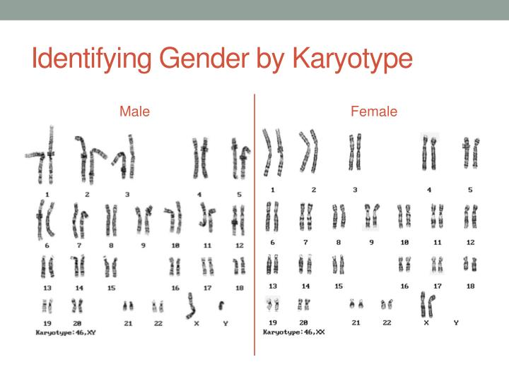 Identifying Gender by Karyotype