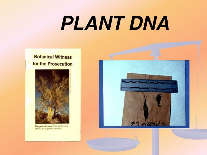 PLANT DNA