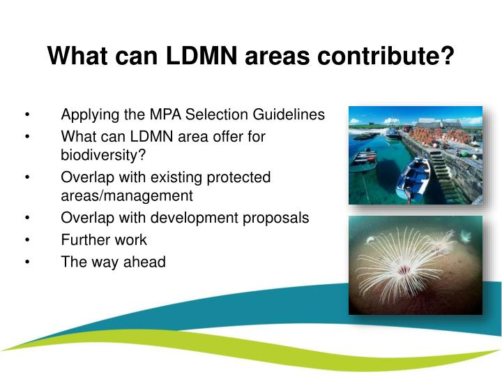 What can ldmn areas contribute