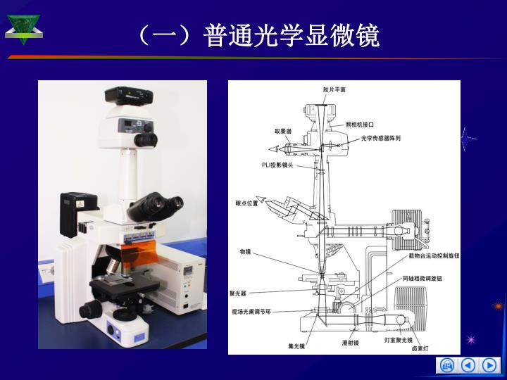 (一)普通光学显微镜