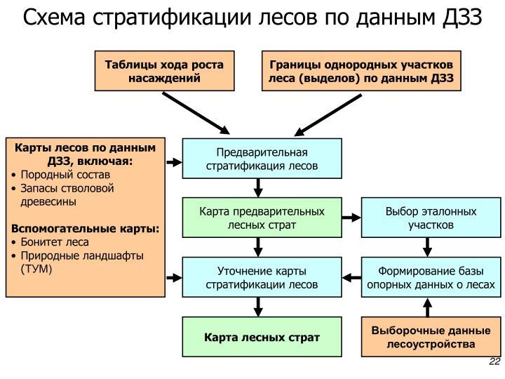 Схема стратификации лесов по данным ДЗЗ