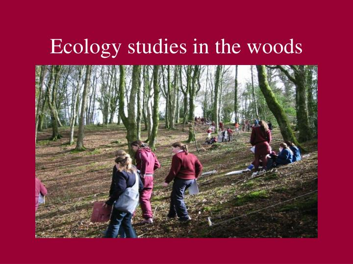 Ecology studies in the woods