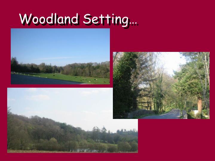 Woodland Setting…