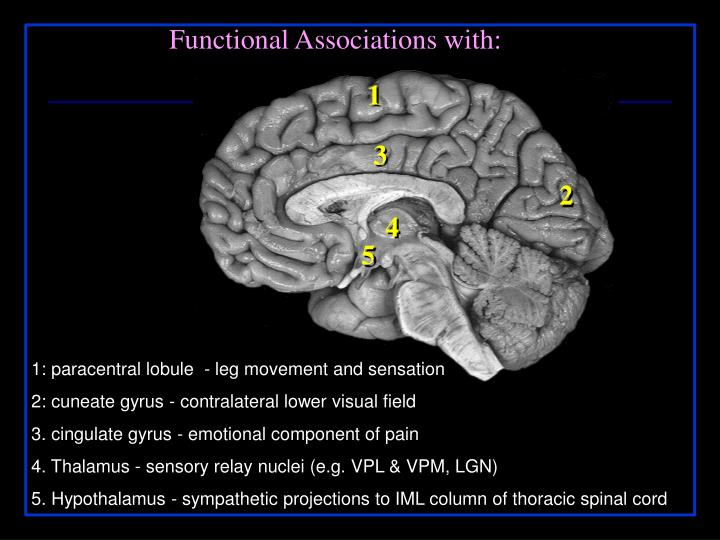 Functional Associations with: