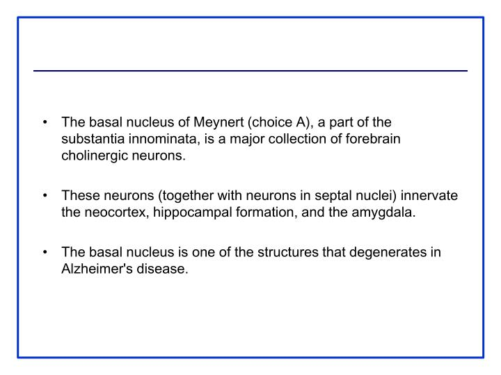 The basal nucleus of Meynert (choice A), a part of the substantia innominata, is a major collection of forebrain cholinergic neurons.