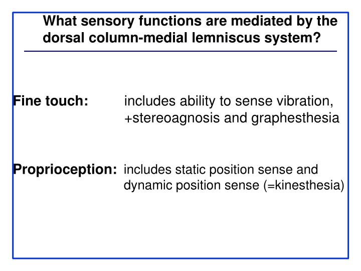 What sensory functions are mediated by the
