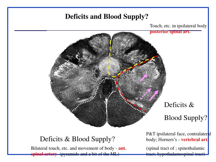 Deficits and Blood Supply?