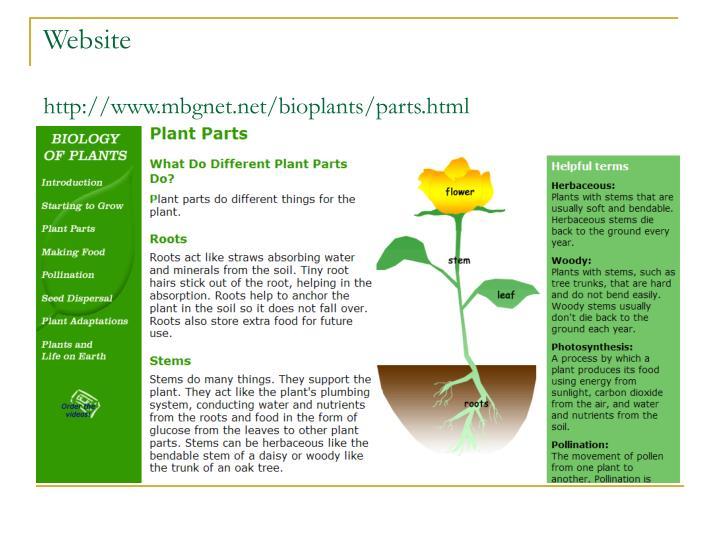 Plant stem parts