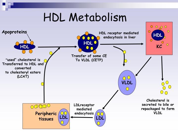 HDL Metabolism