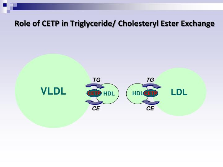 Role of CETP in Triglyceride/