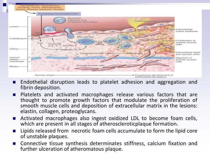 Endothelial disruption