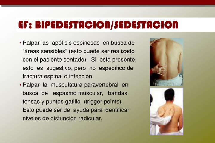 EF: BIPEDESTACION/SEDESTACION