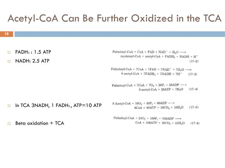 Acetyl-CoA Can Be Further Oxidized in the TCA