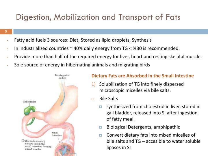 Digestion, Mobilization and Transport of Fats