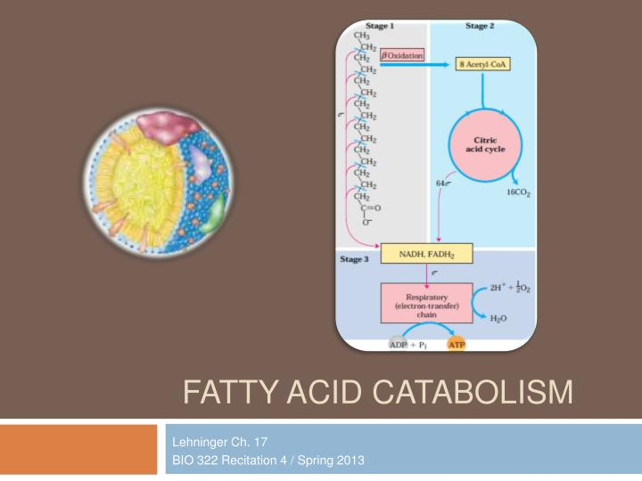 Fatty acid catabolism