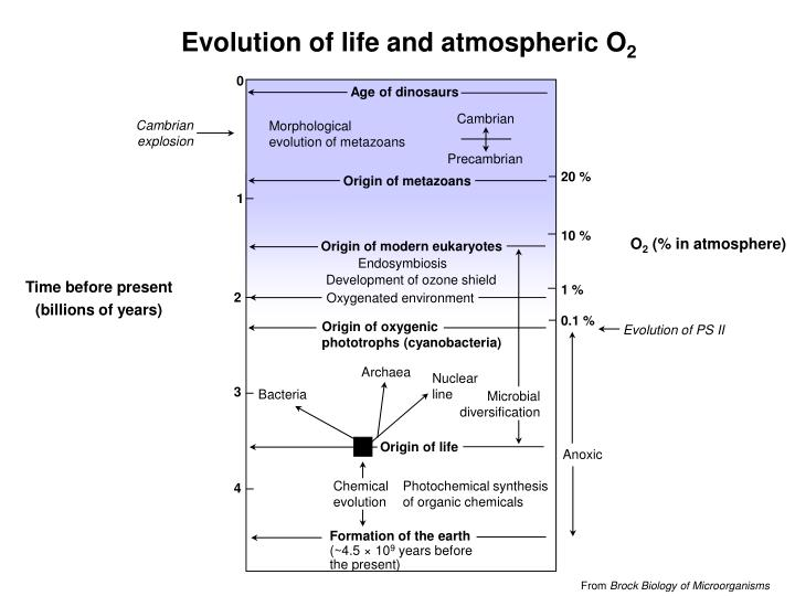 Evolution of life and atmospheric O
