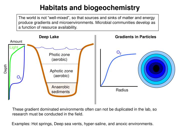 Habitats and biogeochemistry