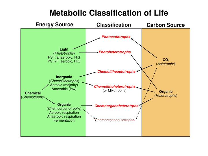 Metabolic Classification of Life