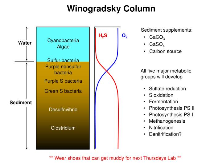Winogradsky Column
