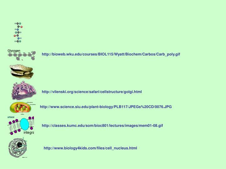 http://bioweb.wku.edu/courses/BIOL115/Wyatt/Biochem/Carbos/Carb_poly.gif
