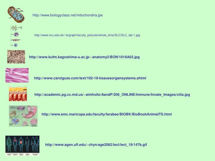 http://www.biologyclass.net/mitochondria.jpe