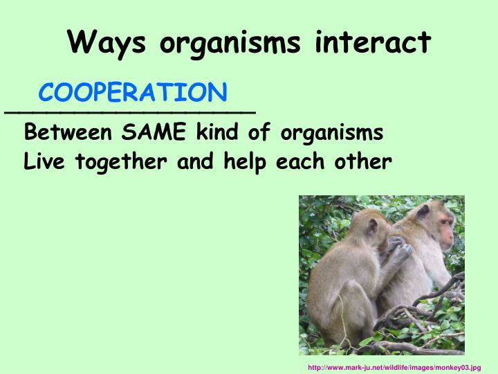 Ways organisms interact
