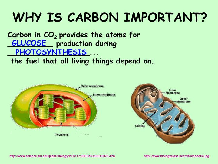 WHY IS CARBON IMPORTANT?