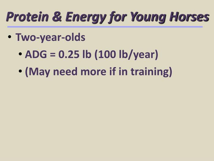 Protein & Energy for Young Horses