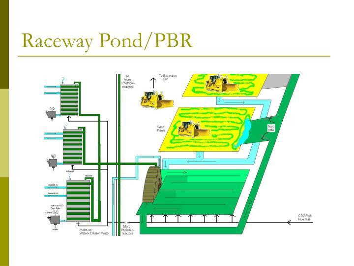 Raceway Pond/PBR