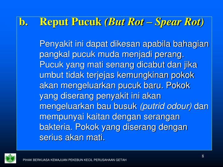 Reput Pucuk