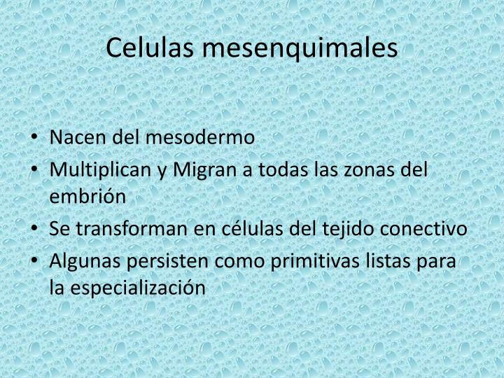 Celulas mesenquimales