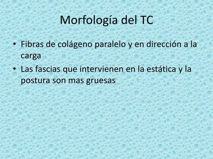 Morfología del TC