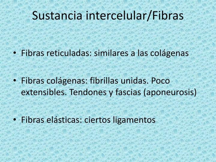 Sustancia intercelular/Fibras