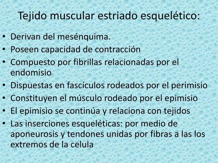 Tejido muscular estriado esquelético: