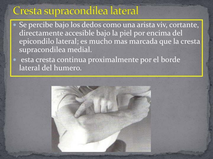 Cresta supracondílea lateral