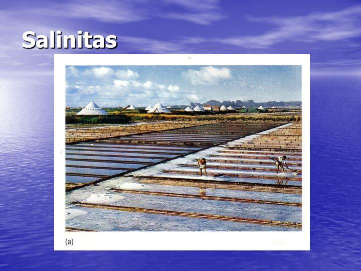 Salinitas