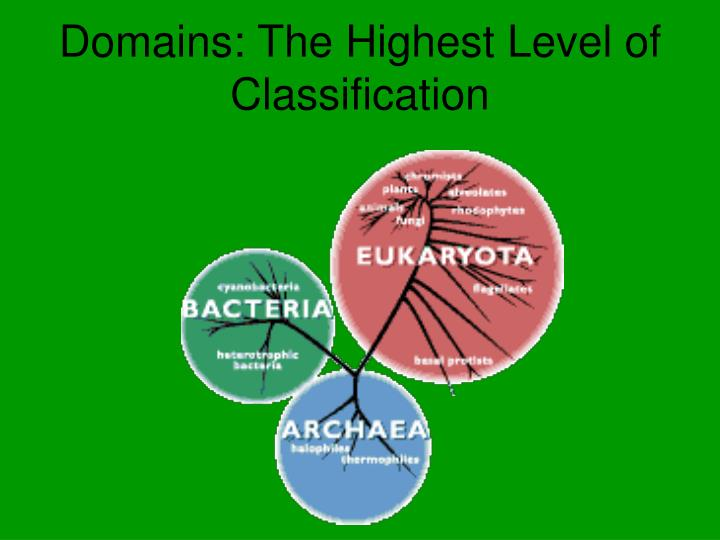 Domains: The Highest Level of Classification