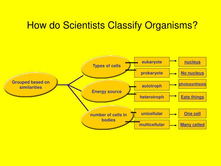 How do Scientists Classify Organisms?
